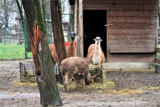 Râmnicu Vâlcea Grădina Zoologică a luat toate măsurile pentru ca animalele să nu sufere din cauza gerului care va cuprinde România