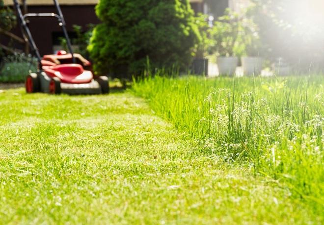 Tu știi cum să ai grijă de zona verde din curtea ta? Iată cele mai bune sfaturi de îngrijire a gazonului la început de an!